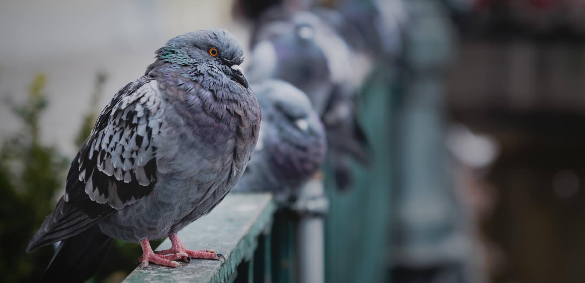 Taubenkot entfernen Taubenabwehr Taubenabwehrsysteme